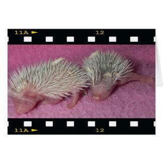 Tiny hedgehog babies card