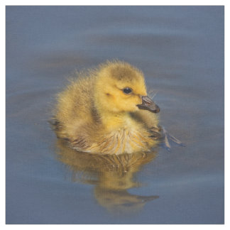 Tiny Swimmer: Canada Goose Gosling Fabric