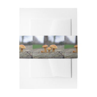 Tiny Toadstools Macro Invite Belly Bands Invitation Belly Band