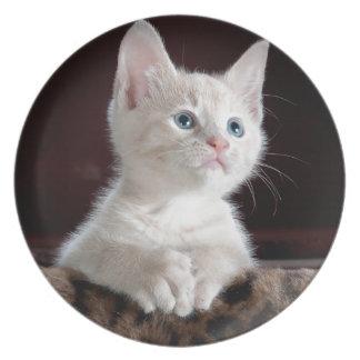 Tiny White Kitten Plate