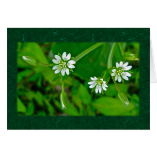 Tiny White Wildflower Coordinating Items Greeting Card