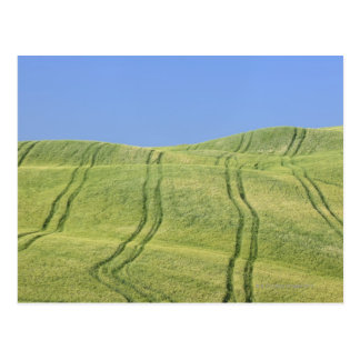 Tire Tracks in Wheat Field, Val d'Orcia, Siena Postcard