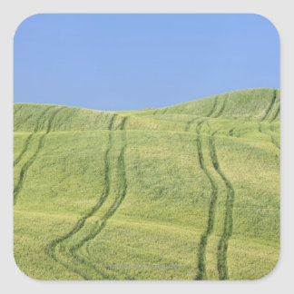 Tire Tracks in Wheat Field, Val d'Orcia, Siena Square Sticker