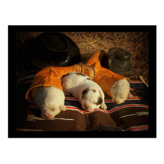Tired Cowboy Puppies Postcard