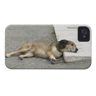 Tired Dog Blackberry Bold case