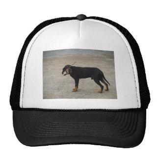 Tired Hunting Dog Mesh Hats