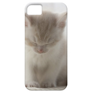 Tired Kitten Sleeping Barely There iPhone 5 Case