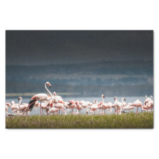 Tissue Paper with Image of Flamingos