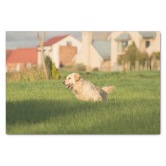 Tissue Paper with Image of Golden Retrieve Running