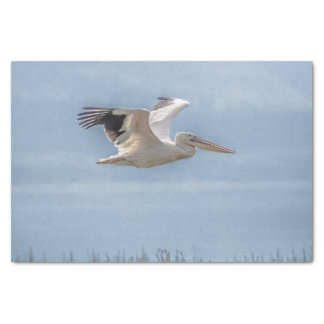 Tissue Paper with Image of Pelican in Flight