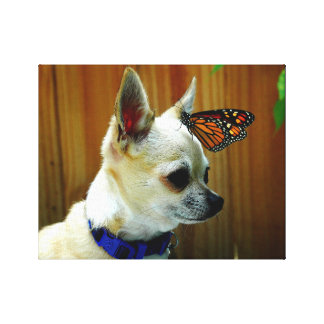 Tito and his butterfly canvas print