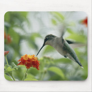 To Catch A Hummingbird Mousepad