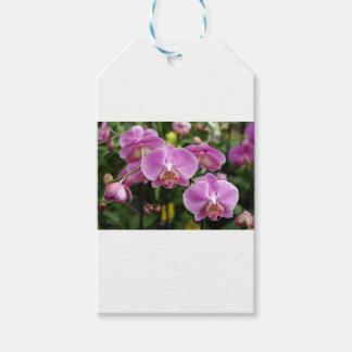 to orchid_fresh_flower gift tags