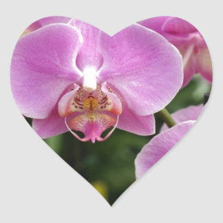 to orchid_fresh_flower heart sticker