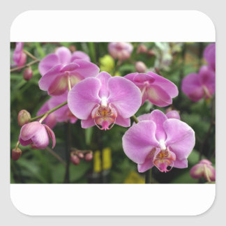to orchid_fresh_flower square sticker