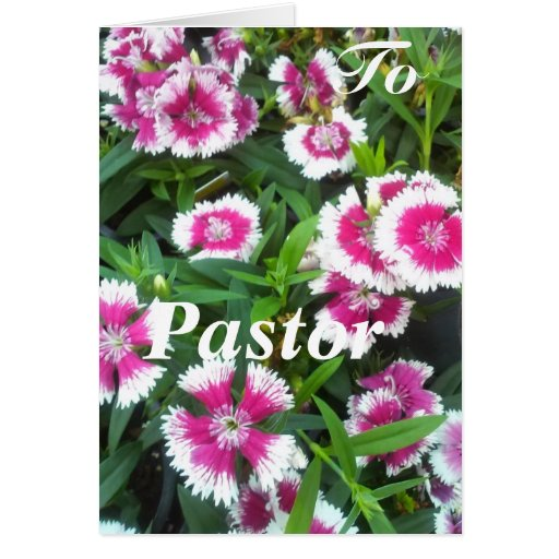 To Pastor Cards