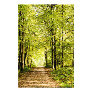 To pathway covered by leaves in magical a Forest Photo Art