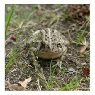 Toad, Acrylic Print. Acrylic Print