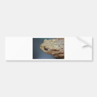 Toad Bumper Stickers