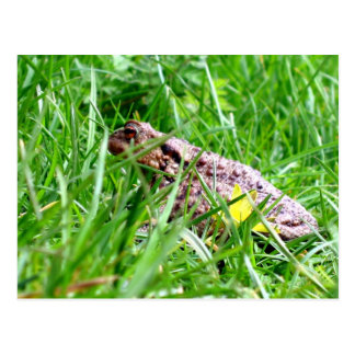 Toad in the grass post card