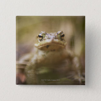 Toad of the Day 15 Cm Square Badge