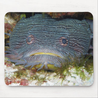 Toadfish Looking At Us Mouse Pads