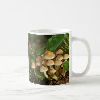 Toadstool Mushrooms Gorgeous Photograph Basic White Mug