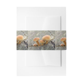 Toadstools on a Tree Trunk Invite Belly Band Invitation Belly Band