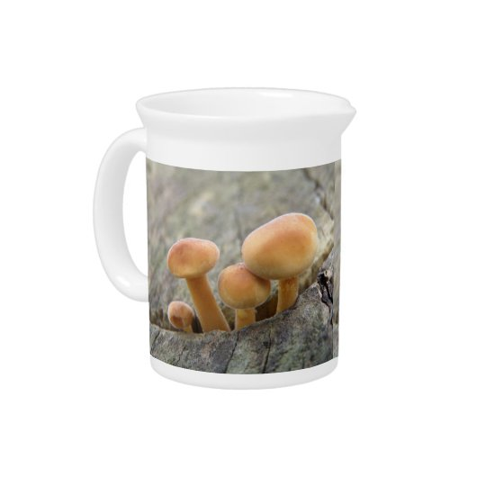 Toadstools on a Tree Trunk Pitcher