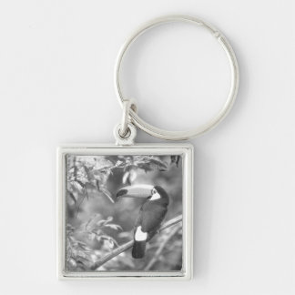 TOCO TOUCAN PHOTO BLACK AND WHITE Silver-Colored SQUARE KEY RING