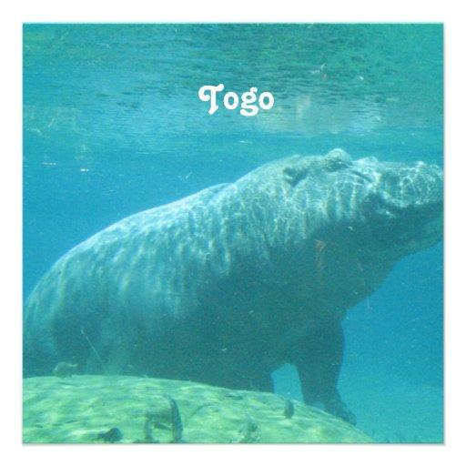 Togo Hippo Personalized Announcement