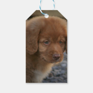 Toller Puppy Cute NSDTR Gift Wrap Set Duck Toller Gift Tags