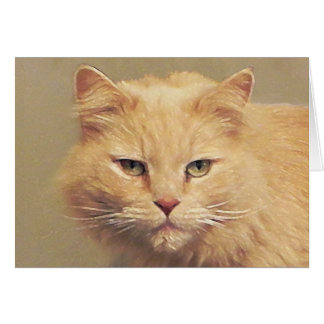 Tom Cat Get Well Soon Greeting Card
