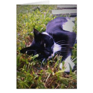 tom cat greeting card