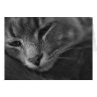Tom - The Cat Card