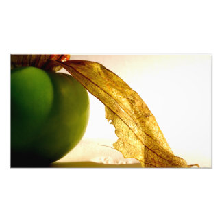 Tomatillo Study Photo Print