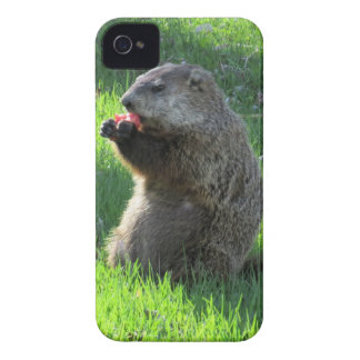 Tomato Groundhog iPhone 4 Cover