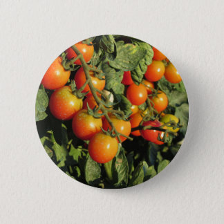 Tomato plants growing in the garden 6 cm round badge