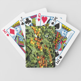 Tomato plants growing in the garden bicycle playing cards