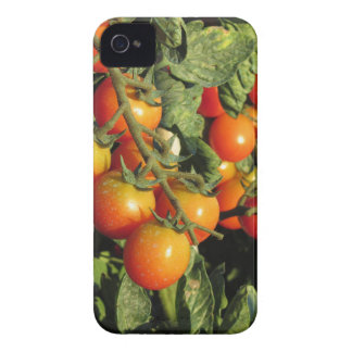 Tomato plants growing in the garden iPhone 4 Case-Mate case