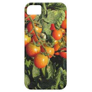 Tomato plants growing in the garden iPhone 5 cases