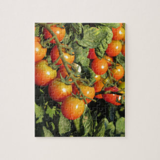 Tomato plants growing in the garden jigsaw puzzle