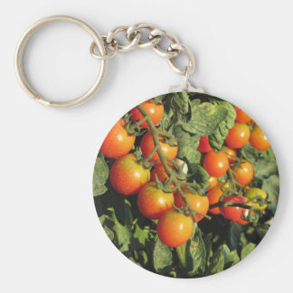 Tomato plants growing in the garden key ring
