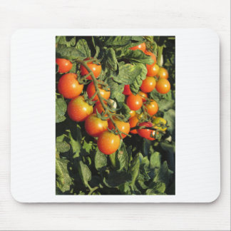 Tomato plants growing in the garden mouse pad
