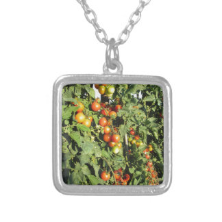 Tomato plants growing in the garden silver plated necklace