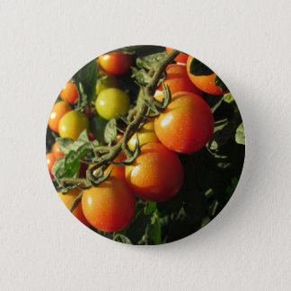 Tomato plants growing in the garden . Tuscany 6 Cm Round Badge
