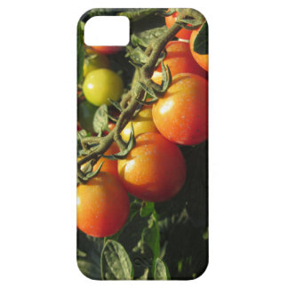 Tomato plants growing in the garden . Tuscany iPhone 5 Cases