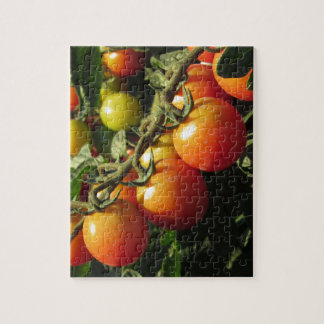Tomato plants growing in the garden . Tuscany Jigsaw Puzzle