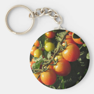 Tomato plants growing in the garden . Tuscany Key Ring