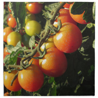 Tomato plants growing in the garden . Tuscany Napkin